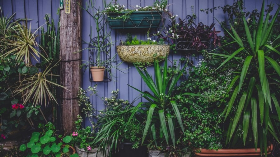 Choosing plants for small spaces